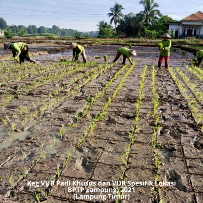 BPTP Lampung Makin Dekat ke Petani dengan Demplot VUB Padi Khusus dan Padi Spesifik Lokasi
